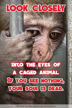 Look closely into the eys of a caged animal. If you see nothing, your soul is dead.  #animal #caged #closely #dead #eyes #into #look #nothing #quotes #soul