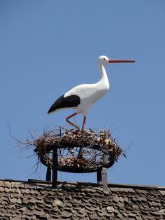 storks on the roof Solvang California, California Usa, Storks, Santa Ynez, Birds, Frogs, Pets, Bucket, Photography