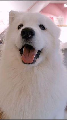 The 20 Smartest Dog Videos Super Cute Puppies, Cute Baby Dogs, Cute Little Puppies, Cute Funny Dogs, Super Cute Animals, Cute Cats And Dogs, Cute Dogs And Puppies, Cute Little Animals, Cute Funny Animals