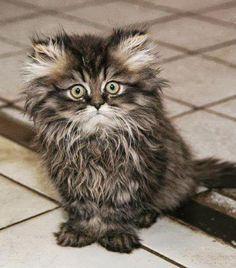 Забавные и смешные кошки фото
