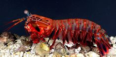 Shrimp-inspired camera leads to new underwater GPS