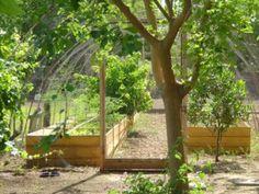 Bij permacultuur worden alle ecologische niches op een stuk land opgevuld. Daardoor kunnen vaak hoge oogsten gehaald worden.