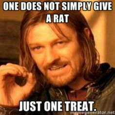 Rats and treats. So true, our rats are so cute I can't help but give them more treats.