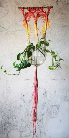 Handmade and dyed macrame plant hanger. Oak dowel 14 wide, planter approx 52 long, holds a 7 round pot or vase. Bonsai Trees For Sale, Diy And Crafts, Arts And Crafts, Jute Crafts, Do It Yourself Home, Hanging Plants, Bohemian Decor, House Plants, Sewing Crafts