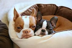 This reminds me of Itty Bitty & Louis, when they were little and of course without Bitty's cleft lol!!!