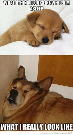 Exactly! #pet #dogs #sleeping