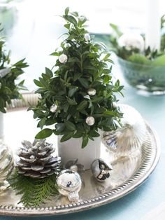 Christmas in a teacup! Boxwood clippings in a white tea cup become a tiny holiday tree. Fill the cup with oasis foam and stud with green clippings. Use a hot glue gun to attach silver dragees from your cake-decorating stash. Add sparkle to natural cones and acorns with a light spray of silver paint.