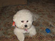 Lulu, Miss personality, my baby.