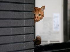 Free wallpaper City cat looking trought window