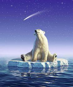 Polar Bear Canvas Art - Shooting Star by Jerry LoFaro Polar Bear Drawing, Animal Magic, Canvas Art, Canvas Prints, Bear Art, Thing 1, Shooting Stars, Art History, Fine Art America