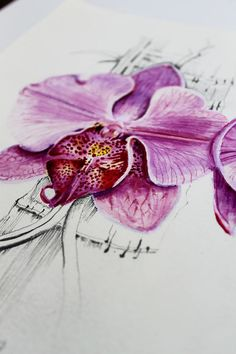 Orchid Study 1  original watercolour & pencil by ellynelly on Etsy, $150.00