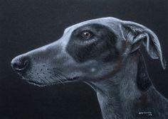 Greyhound on Black