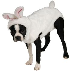 Bunny Pet Costume from BuyCostumes.com #Bunny #PetCostume #DogCostume @BuyCostumes #OrangeTuesday #ad