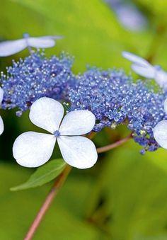 Les plantes qui résistent au manque d'eau