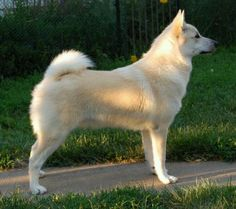 Breed Love | Doggerel