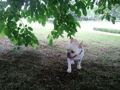 Under thetree