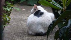 背中にゃ~猫(C-301)猫写真-横浜