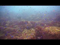 伊豆初島でのダイビングは南国のようにカラフルな海