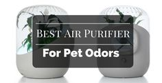Best Air Purifier For Pet Odors To Get Fresh Air