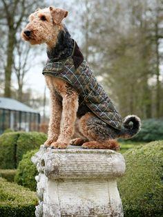 'Dog Coat' Kariert von Barbour