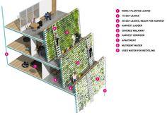 Spark designs model for Asian retirement communities that double as city farms