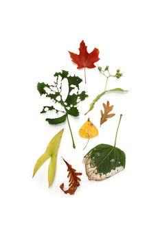 harbingers of fall (mary jo hoffman)