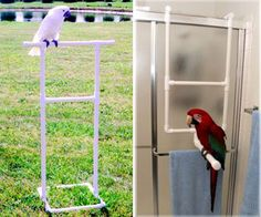 PVC Parrot Bird Stands for Shower Bathing (Jouet Pour Perroquet) Diy Parrot Toys, Diy Bird Toys, Parrot Pet, Parrot Bird, Bird Aviary, Bird Perch, Macaw Cage, Parrot Play Stand, Diy Bird Cage