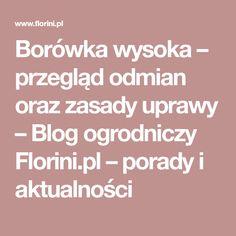 Borówka wysoka – przegląd odmian oraz zasady uprawy – Blog ogrodniczy Florini.pl – porady i aktualności