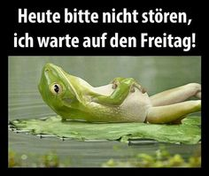 Eingebetteter Bild-Link Cool Pictures, Funny Pictures, Weekend Quotes, Days Like This, Just Smile, Man Humor, Albert Einstein, Quotations, Funny Quotes