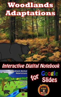 Teaching and learning about Woodlands Animal Adaptations has just gone digital with this interactive digital notebook for Google Slides.  Students will research structural and behavioral adaptations of woodland animals.  Web links and video links provided on each slide to guide the research.  Come check out this paid resource!