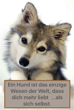 Hund; Spruch