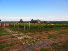 Azerbaijan   Gabala   ASPI Vineyard   SAVALAN wines