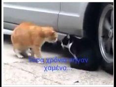 Η γάτα τα χώνει στον γάτο που την κεράτωσε! - YouTube F2 Savannah Cat, Savannah Chat, Cat Whisperer, Animals, Youtube, Cats, Memes, Lawn And Garden, Animales