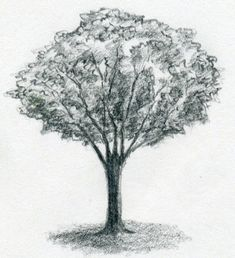 Learn the basics of drawing trees in this free class presented by Sue Davidson! Materials provided. Registration in advance is required. This presentation is for students in middle school, high school, and for adults and takes place at the Main Library on September 16, 2016 from 3:00 – 5:00pm. For more information, please contact 260-421-1210.