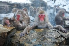 地獄谷野猿公苑|ようこそ、ニホンザルの世界へ