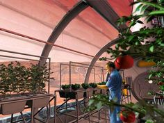 NASA ponders food supply for 2030s mission