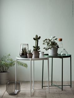 GLADOMbrickbord blir fina som terrarier åt minikaktusar och succulenter. De passar fint i stilen till vårens skandinaviskt grafiska växttrend.