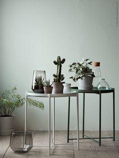 Deko in Grün - hier wurde die Wand passend zu unserem grünen GLADOM Tisch gestrichen. Pflanzen und Töpfe in dazupassenden Farben schaffen eine ruhige Atmosphäre.