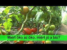 Mitől öko az öko, miért jó a bio? Vegetables, Youtube, Veggies, Vegetable Recipes, Youtubers, Youtube Movies