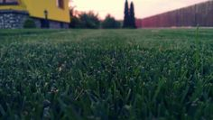 English lawn...