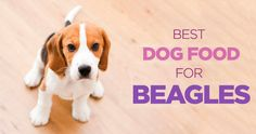 See which dog food is best for your Beagle. #dogs #pets #doglovers #dogfood #petcare #pethealth #dog #dogtraining #healthydog #petfood #beagle