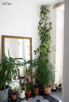 urban jungle bloggers / urbanjunglebloggers / vegetable / fleurs / plantes / végétation / verdure / interi