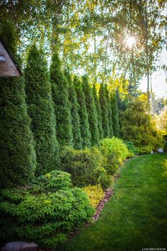 Amazing Evergreen Landscape Ideas For Front Yard Garden - Modern Large Backyard Landscaping, Privacy Landscaping, Backyard Privacy, Landscaping Ideas, Acreage Landscaping, Landscaping Software, Arborvitae Landscaping, Mulch Ideas, Inexpensive Landscaping