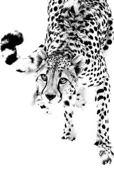 META Monaco - Art Gallery & Jewelry Designers in Monte-Carlo now showing Totem Poems by NYC artist Gregory de la Haba Beautiful Creatures, Animals Beautiful, Big Cats, Cute Cats, Cheetah Pictures, Animals And Pets, Cute Animals, Wildlife Art, Animal Drawings