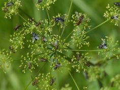 An assembly of insects (4).