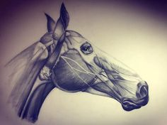 """Anatomy of a Horse's Head graphite on Paper 30""""x20"""""""