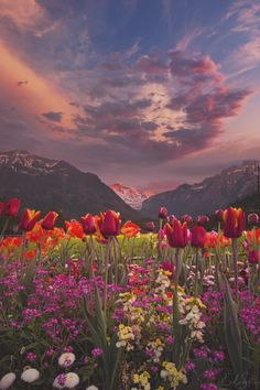 Tulip Valley by Erik Sanders ~ Interlaken, Switzerland. Gorgeous Tulips and a beautiful sky. Mother Nature sure knows how to call attention to herself. Beautiful World, Beautiful Places, Beautiful Sunset, Beautiful Scenery, Beautiful Nature Pictures, Beautiful Eyes, Amazing Places, Landscape Photography, Nature Photography