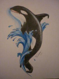 orca drawing , color pencil