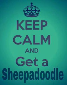 Keep calm and get a Sheepadoodle