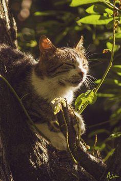 Visual Androgyny Androgyny, The Originals, Cats, Photography, Animals, Gatos, Photograph, Animales, Kitty Cats